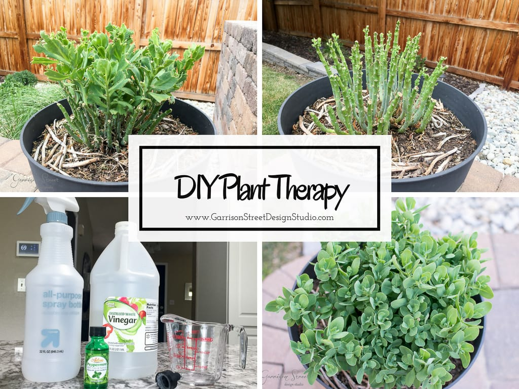 DIY Plant Therapy